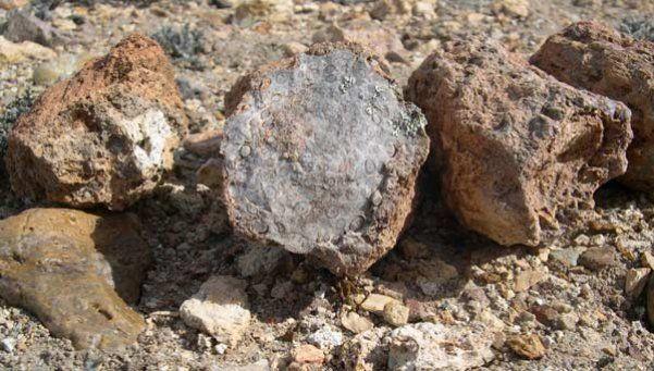 Descubren un gran yacimiento de fósiles jurásicos en Santa Cruz