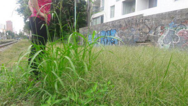 Dengue: fumigación en varias plazas de la Ciudad