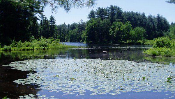 El agua, un recurso que debe protegerse con los humedales