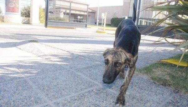 La historia de un perro que espera a su dueño en la puerta del Casino