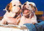 Las mascotas también pueden estar radiantes