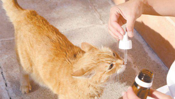 Terapias alternativas en mascotas, ¿mito o realidad?