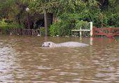 Apareció un lobo marino en Gualeguaychú