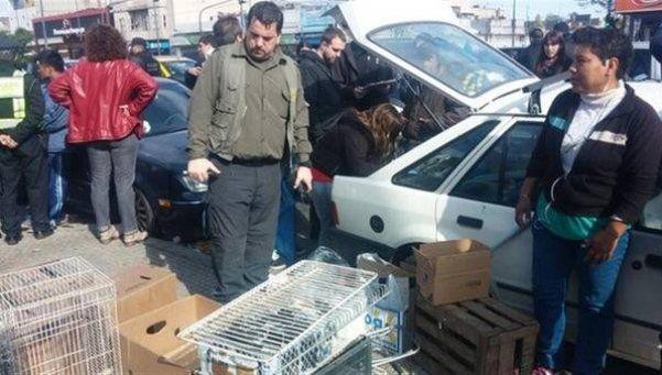 Rescatan a más de cien animales del mercado negro de Pompeya