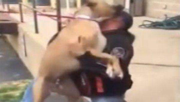 El reencuentro de un perro con su dueño que te hará llorar