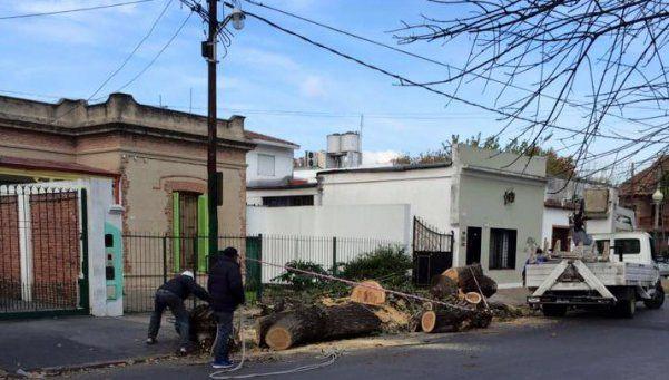 Lomas de Zamora se queda sin oxígeno por podas indiscriminadas