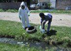 Confirman 14 casos de dengue en La Plata