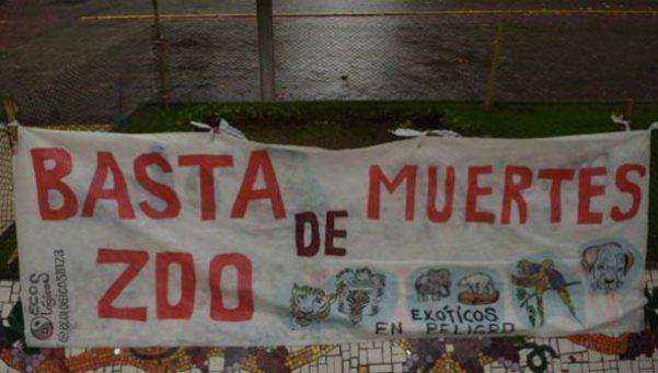 Denuncian la desaparición del cuerpo de una pantera en Mendoza