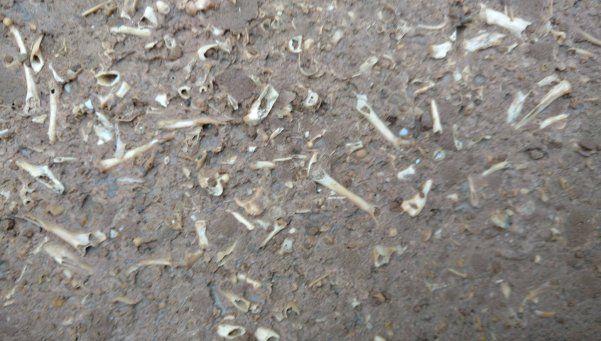 Nene de 4 años encontró fósiles de al menos medio millón de años