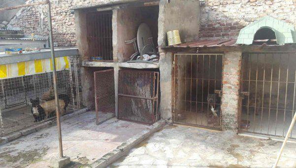 Rescatan 14 pitbulls de un criadero ilegal en Villa Devoto