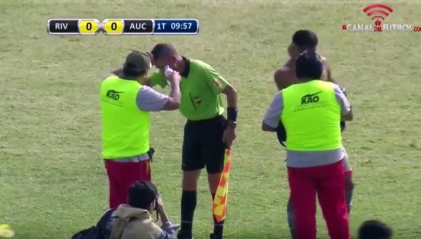 Video | Abejas invaden estadio y obligan a suspender partido