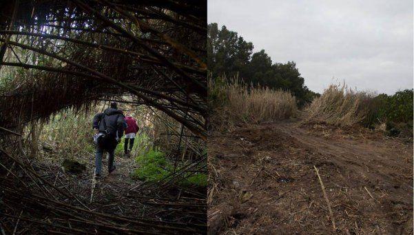 Arrasaron parte del bosque nativo de la ribera de Bernal