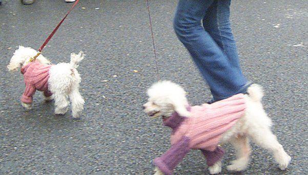 Cada vez hay más robos de perros de raza