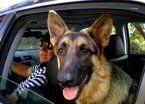 5 tips para que las mascotas no sufran durante las vacaciones