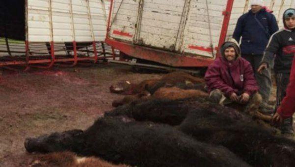 Volcó un camión con vacas y vecinos las faenaron