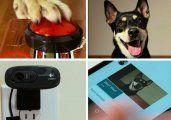 Le enseñó a su perro a sacarse selfies y lo mostró por YouTube