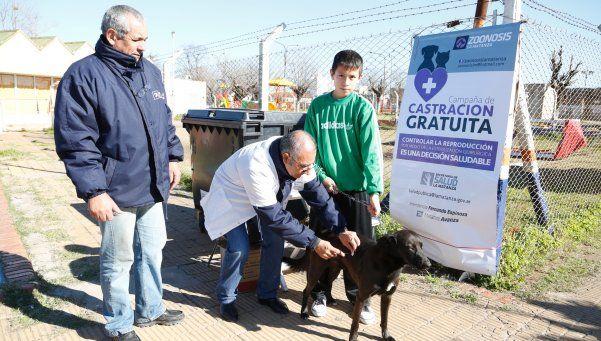 Continúan los operativos de castración de perros y gatos