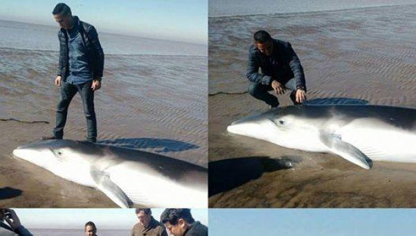 Devolvieron al mar a un ballenato que apareció en Punta Indio