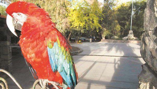 Más de 30 animales del ex Zoo serán llevados a Misiones