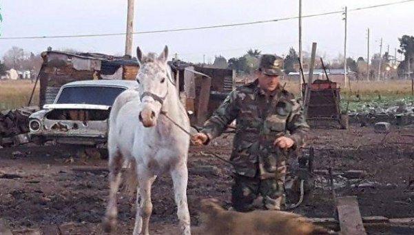 Animales vivían un calvario en un campo de San Vicente