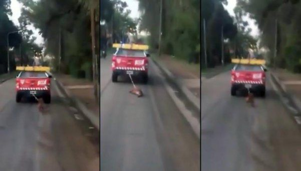 Indignante: un móvil de la policía de Tigre arrastra a un perro