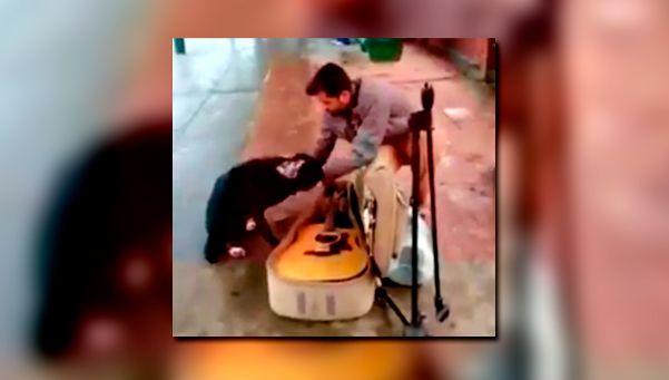 Negrita, la perra que acompaña a un músico en la estación de Burzaco
