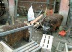 Rescatan 50 animales abandonados en Caseros