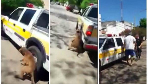 Video | Empleado municipal arrastró a perro atado a su camioneta