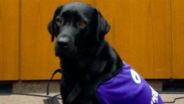 Merel, la perra que acompaña a chicos a declarar en la Justicia