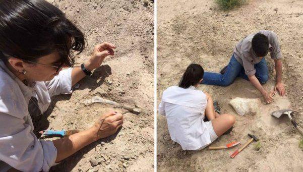 Hallan fósiles de dinosaurios en Neuquén