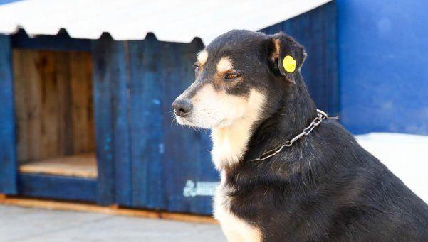 Novedoso registro para los perros callejeros en Berazategui