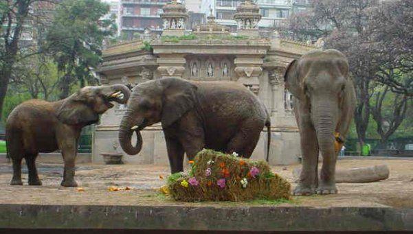 Las elefantas del Ecoparque tendrán sus propios abogados