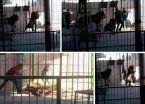 Video | Un león mató a su domador en plena función