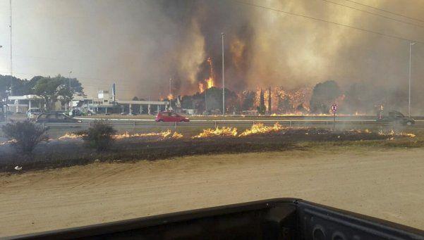 Incendio en Valeria del Mar: tardarán 30 años en recuperar el bosque