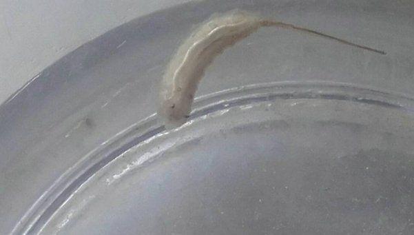 Aparecen gusanos en el agua corriente en Varela