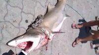 Apareció un tiburón muerto en la escollera de Mar del Plata