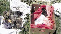 Cada día roban 15 mascotas para rituales sangrientos