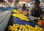 ¿Cómo afectará a los productores de limones la medida de Trump?