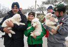 Italia: rescatan a tres cachorros en hotel devastado por avalancha