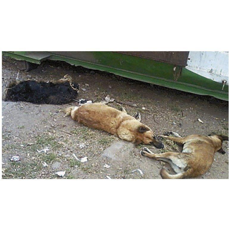 Brutal matanza de perros callejeros en Solano