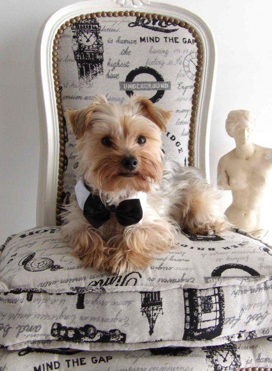 Toto tiene una vida intensa