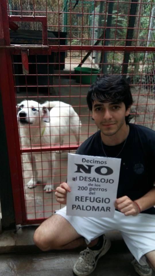 Luchan para evitar el desalojo de un refugio para 200 perros