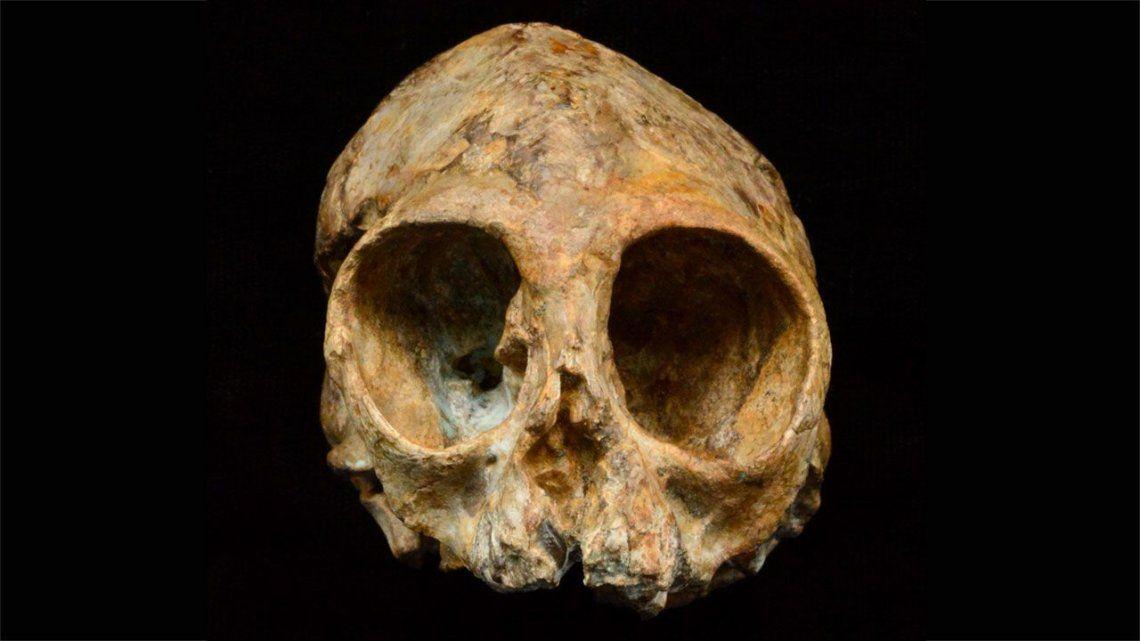 Un cráneo de 13 millones de años podría ser el eslabón perdido de la evolución humana