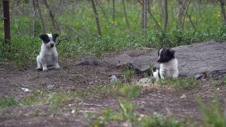 Los cachorros de Chernobyl: tiernos pero radiactivos
