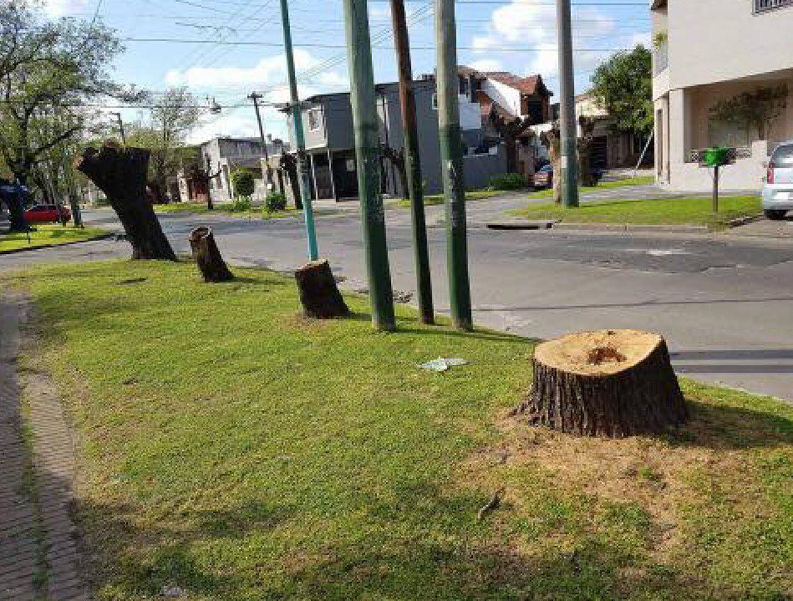 Fuerte reclamo en Lomas de Zamora por tala indiscriminada de árboles