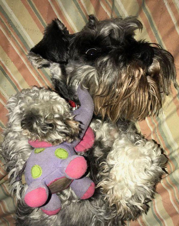 Pepa, con su juguete favorito