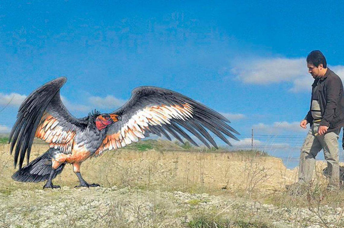Encontraron un cóndor de 30 mil años en Marcos Paz