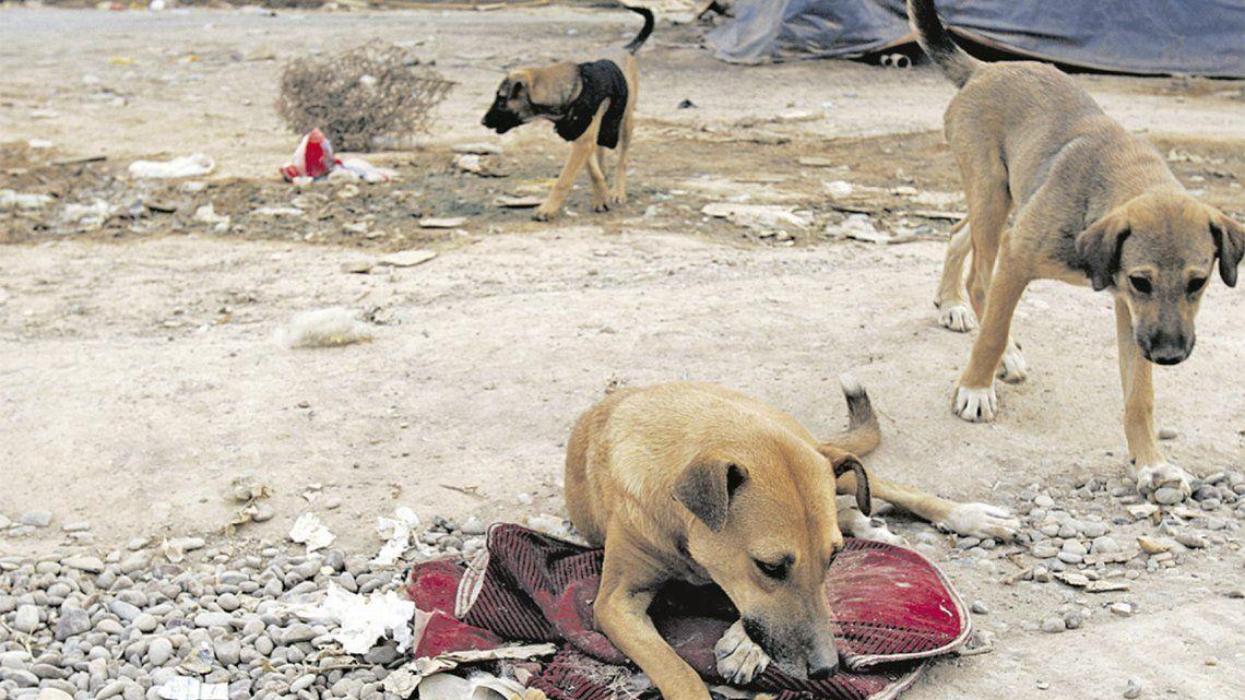 Hay unos 6 millones de perros en situación de calle en el Conurbano