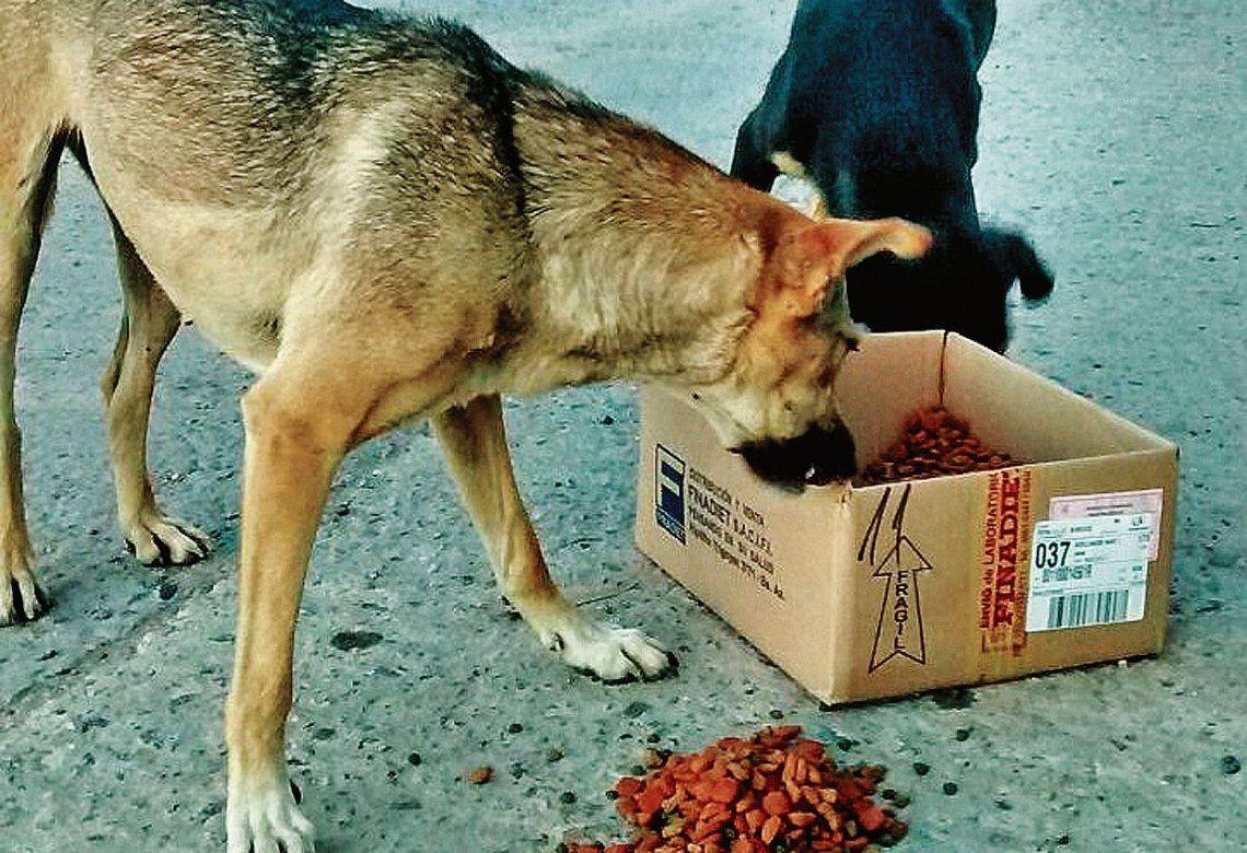 dParque Patricios es uno de los barrios que mayor proliferación tuvo en cuanto a los perros perdidos.
