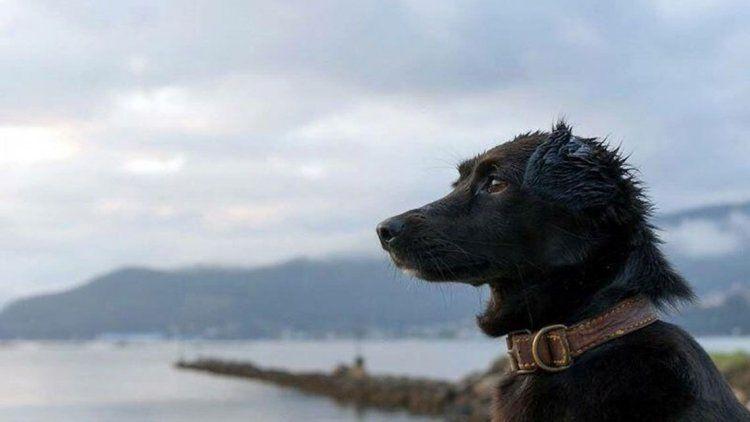 Murió Comando, el perro que esperaba el retorno del ARA San Juan
